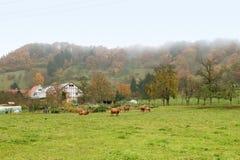 有薄雾的秋天风景 库存图片