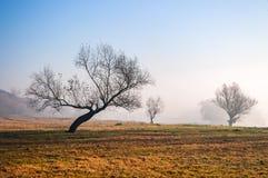 有薄雾的秋天 库存照片