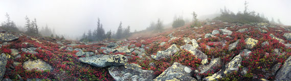 有薄雾的秋天 库存图片