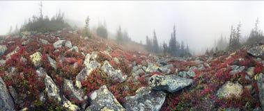 有薄雾的秋天 免版税库存照片