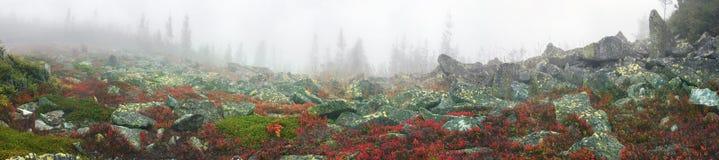 有薄雾的秋天 免版税库存图片