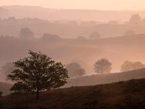 有薄雾的结构树横向剪影 免版税库存照片