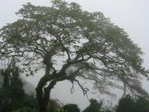 有薄雾的结构树 图库摄影