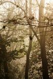 有薄雾的结构树 免版税库存照片