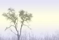 有薄雾的结构树 库存图片