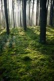 有薄雾的老有雾的森林 图库摄影