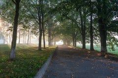 有薄雾的胡同在公园 免版税库存照片