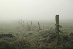 有薄雾的草甸 免版税库存图片