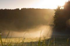 有薄雾的草甸 库存照片