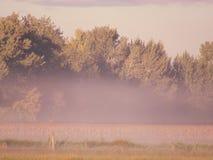 有薄雾的草甸 免版税库存照片