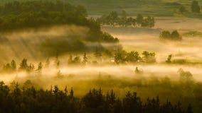 有薄雾的草甸 免版税图库摄影