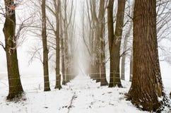 有薄雾的行结构树冬天 免版税库存图片