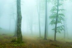 有薄雾的足迹到森林里在一个多雨早晨 图库摄影