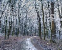 有薄雾的足迹在秋天森林里 免版税库存照片