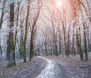 有薄雾的足迹在秋天森林里 库存图片