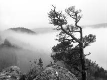 有薄雾的距离 免版税库存图片