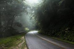 有薄雾的路在森林里 免版税库存图片