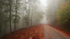 有薄雾的路径 图库摄影
