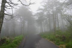 有薄雾的路径 库存照片