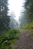 有薄雾的路通过森林 免版税库存照片