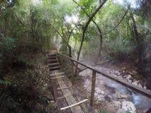 有薄雾的雨林 免版税库存图片