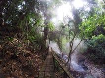 有薄雾的雨林 库存图片