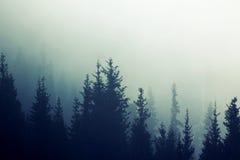 有薄雾的雾杉木森林山坡上色定调子 免版税库存照片