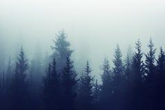 有薄雾的雾杉木森林山坡上色定调子 免版税库存图片