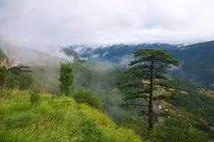 有薄雾的风景 免版税图库摄影