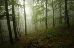 有薄雾的绿色森林 免版税库存照片