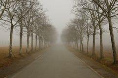 有薄雾的aveneu 库存图片