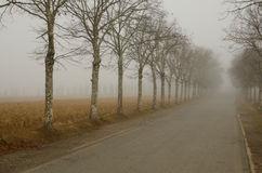 有薄雾的aveneu 免版税库存照片