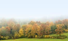 有薄雾秋天的森林 免版税库存照片