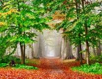 有薄雾秋天的森林 库存图片