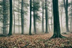 有薄雾秋天的森林 图库摄影