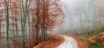 有薄雾秋天的森林 免版税库存图片