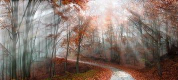 有薄雾秋天的森林 库存照片