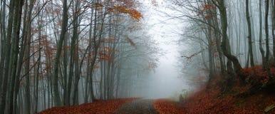 有薄雾秋天的森林 免版税图库摄影