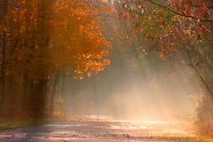 有薄雾秋天的横向 免版税库存照片
