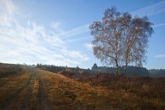 有薄雾秋天黎明有雾的森林的横向 图库摄影