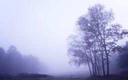 有薄雾秋天黎明有雾的森林的横向 库存图片