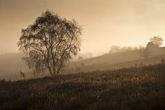 有薄雾秋天黎明有雾的森林的横向 免版税库存照片