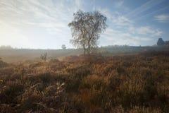 有薄雾秋天黎明有雾的森林的横向 免版税库存图片