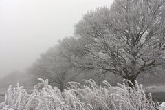 有薄雾&冷淡的早晨在森林里 库存图片