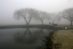 有薄雾moring 免版税库存照片
