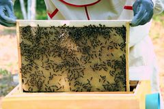 有蜂的蜂农 免版税库存图片