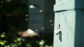 有蜂的蜂房 股票录像