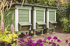 有蜂箱的庭院 免版税库存照片