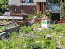 有蜂箱的绿色屋顶 免版税图库摄影