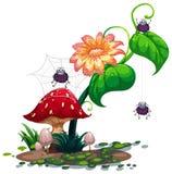 有蜘蛛的一棵植物 免版税库存照片